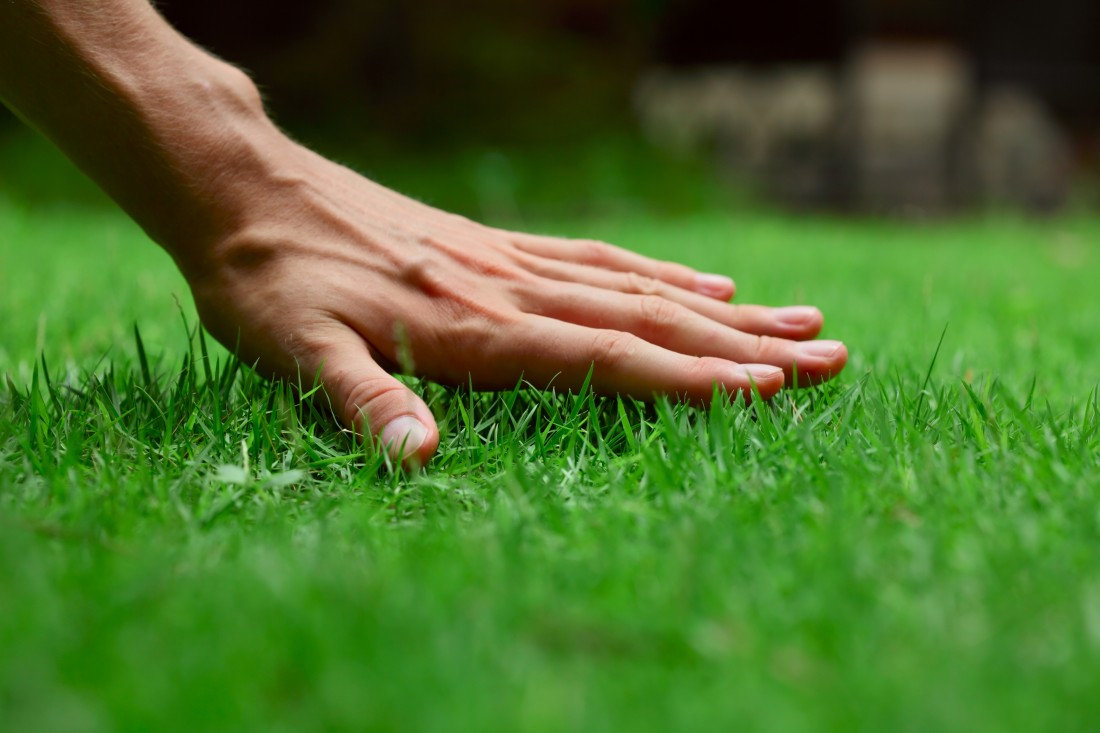Expert Lawn Care Services in South Lyon MI | Spring Fever Lawn Care  - grass