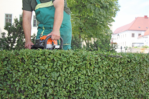 Professional Tree & Shrub Care South Lyon MI | Spring Fever Lawn Care - shrubs
